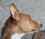 Jake the dog_ Judy+TSMP_20180624_090512